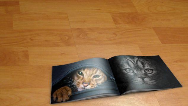un catalogue avec des photos de chats, posé sur le parquet