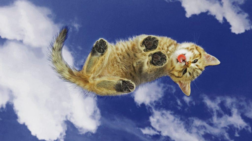 un chaton dans le ciel qui tire la langue